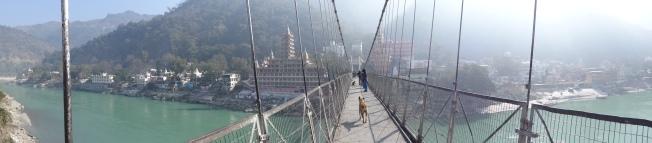 Le pont des singes