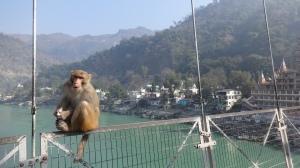 Des babouns encore des babouns