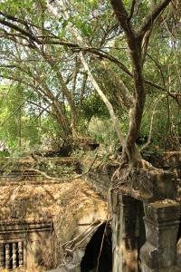 La  jungle du temple Beng Mealea