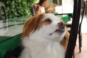 Nicky, le chien d'un restarurant : no comment... ^^