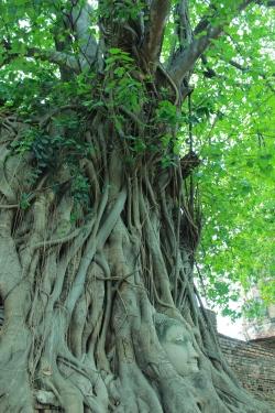 Thai - Ayu - Wat Maratamat (4)