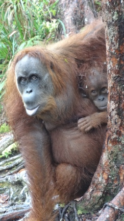 Suma et son petit