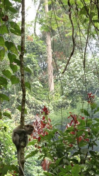 Macaque dans la jungle