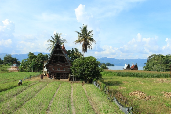Maisons Bataks de Samosir
