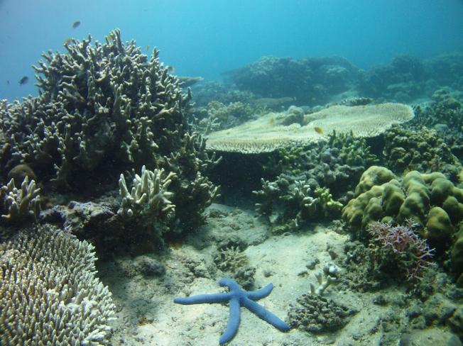 Snorkeling à Pemuteran 2