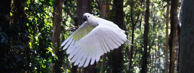 Aus - BlackBett - Les oiseaux (10)