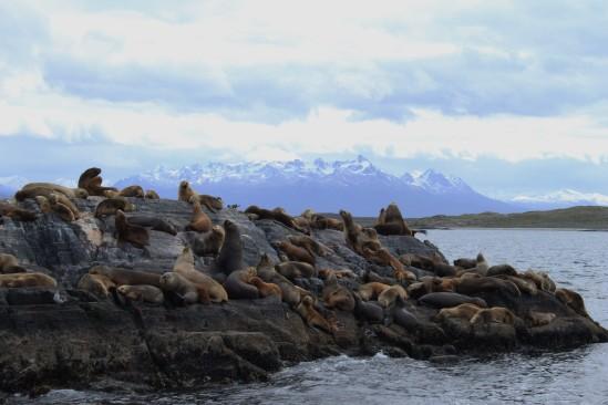 Arg - Ushu - Les lions de mer (14)