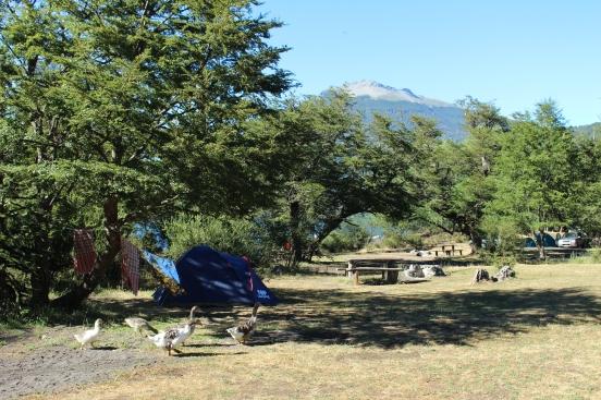 Dans le parc national Lanin