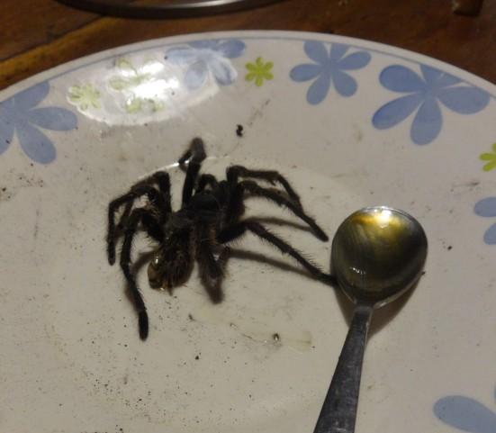 Arg - Nono - L'araignée (3)