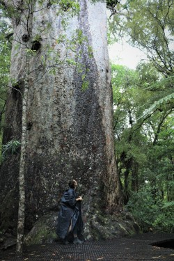 2018 - 01 - Northland - Waipoua Forest (16)