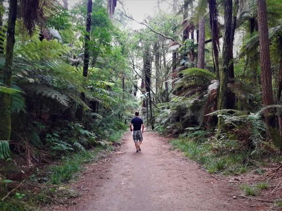 2018 - 01 - Rotorua - Redwoods (4)