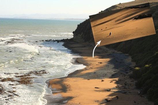 2018-02 - Oamaru - Manchots Yeux jaunes Bushy beach