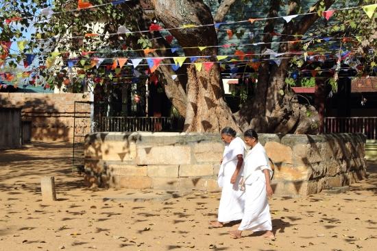 2018-04 - Anuradhapura - Sri Maha Bodhi (6)