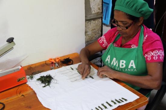 2018-04 - Haputale - Amba tea plantation (10)