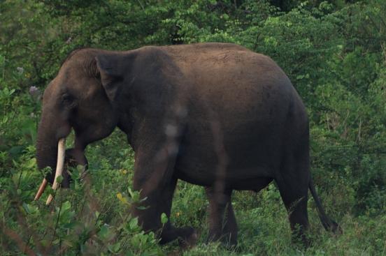 2018-04 - Udawalawe - Safari (11)