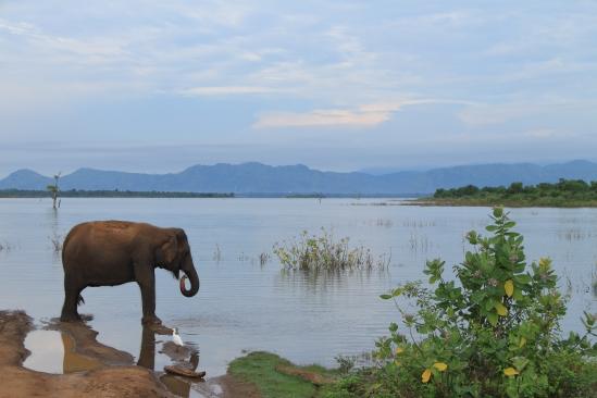 2018-04 - Udawalawe - Safari (31)