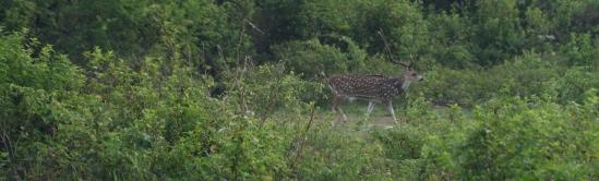 2018-04 - Udawalawe - Safari (53)